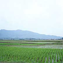 Picture of 南屏 Nanping village