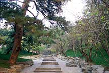 Picture of 园林一路 Garden Path