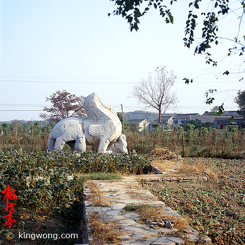 南京六朝石刻--狮子 Nanjing Six Dynasties Stone Beasts--Lion